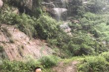 宜宾兴文青山崖三日游,梭罗树。