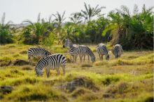 8月的肯尼亚马赛马拉国家公园。