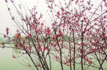 烈士公园的桃花~