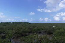 红树林确实超美,里面生态系统保护的比较好,门票有点不值,最后面的海滩挖挖螃蟹挺好!