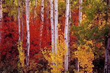 五彩的呼伦贝尔秋天,很美,不一样的感觉,喜欢摄影的福音,等你来!