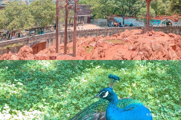 昆明動物園4