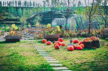 华中小镇采薇园 | 要说华中小镇里我最喜欢的就是采薇园了,在这里当一天快乐的农夫简直再美不过。我第一