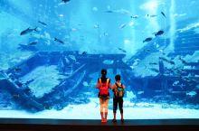 对于生活在海边的人来说,来到圣淘沙S.E.A海洋馆,不会太惊艳。然而,对于自称喜欢海洋生物的儿子来说