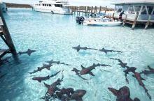 巴哈马拿骚自由行  去这里建议联系小型的船,就是一个船长一艘船只服务于你们的!!!  这样你游玩的时