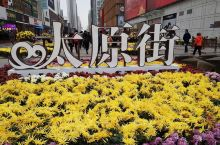 太原街被布置的花团锦簇,成了菊花的世界。