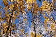 四季里,最爱是秋天 秋高气爽的季节 最适合思考人生 当然还有四处游荡 老树都被秋风 调戏得红了脸 待