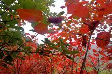 群山层林尽染时,花开娇艳还未来。