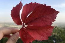 又到了北京的秋天,香山的红叶季马上就要来了!