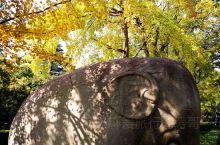 游览最美石象路 景点介绍 石象路石明孝陵神道的第一段,长约615米,沿途依次排列狮子、獬豸(xie