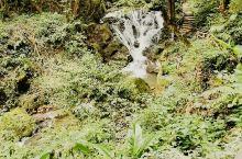 莫里热带雨林,龙听泉音