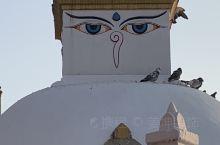 大宝塔是最大的藏传佛教塔,尼泊尔也是释迦牟尼的诞生地。
