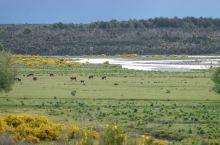 新西兰南岛旅行途中,无处不在的田园牧歌。这些萌萌的羊儿也是太可爱了吧! 南岛·新西兰
