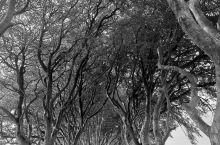 北爱尔兰最美的树隧道——黑暗树篱(The Dark Hedges),同时它也被誉为世界上10条最美树