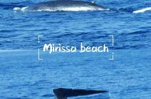 锡兰·美蕊莎|跟着大鲸鱼畅游大海  在斯里兰卡南部的海滨中,美蕊莎是最晚开放的一批,开发项目还没有过