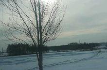 冰雪里铺出金色的路!
