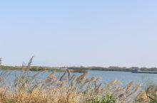 春节不外出,北江大堤自行车一日游
