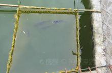 《来自杭州的诱惑:鱼塘直接在院子里》  我是孤独浪子,希望我的拍拍让您有所收获。 漫游神州31载,已