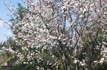 春天已经到了! 植觉植物园