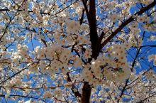 《来自封开的诱惑:我们已经春花灿烂……》  我是孤独浪子,希望我的拍拍让您有所收获。 漫游神州31载