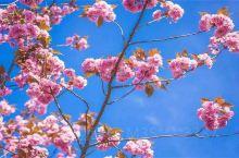 湖南省衡阳市衡山县,乡村一日游。三月桃花盛开的季节,果园处处是各种各样果树开花,鲜花盛开。鲜花的芬芳