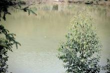 乡村的宁静,让人放松而舒适,河里的鱼儿时不时浮出水面,玩耍,呼吸,成群结队的,甚是好看,引来路人驻足