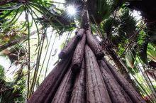 【五月谷国家公园】  普拉兰岛的中心位置有一片原始森林,这里是五月谷国家公园。经典电影《侏罗纪公园