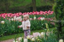 在费城的长木花园,号称美国最美的私人花园,来看看美国富豪的情趣   长木花园 Longwood Ga