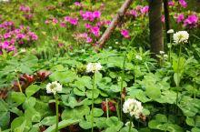 芳草萋萋万里公园里,柔和的春风中,一只只小蜜蜂在争着采蜜!鲜花争研斗艳!树技嫩芽吐绿!好一派春光!