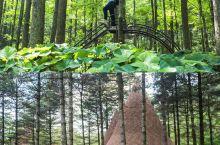 白云山这家藏在森林里的木屋,仿佛住进了童话故事 . 住宿体验,以前在我看来,不过就是一晚上的休息,为