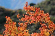 慕田峪长城走起 北平的秋天总是让人流连忘返,每个地方都是充满色彩,尤其是五彩斑斓的慕田峪长城,她被偏