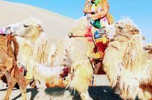 鸣沙山,看到图九的骆驼你会心疼吗?     鸣沙山,位于甘肃省敦煌市,巴丹吉林沙漠和塔克拉玛干沙漠过