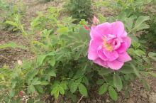 百花园离趵突泉公园不远,园内栽植了不少品种的花草树木,环境优美,空气清新,不同季节过来能够欣赏到各色