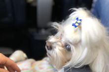 在威尼斯去博洛尼亚的火车上看到一只好可爱的狗狗