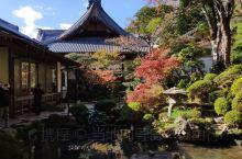 今天的修善寺景色同上周还是有本质的区别,一来天气晴朗、红叶进入佳境,另外一年一度的红叶祭修善寺后院开