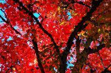 #旅行学英语#美国西部,一棵树的N种姿态