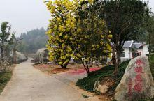 平远县永健庄园位于黄田~龙文省级自然保护区附近,环境优美,庄园主体房屋为上下堂客家传统特色民居,宽敞