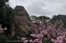 #花海打卡# 舟山的桃花坞花花世界。