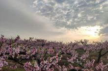 随手一拍 春暖花开