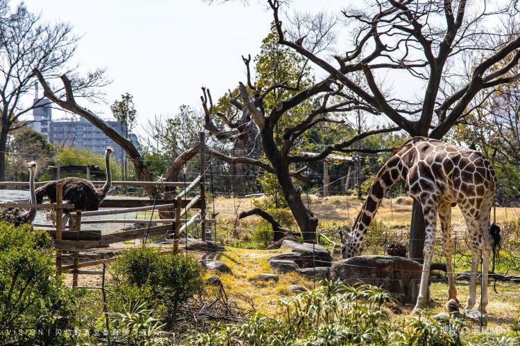 덴노지 동물원3