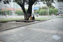 天气好,钟山广场风景很不错。