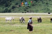 ——走在中国熊猫大道上  ■ 2018年07月15日  沿中国熊猫大道,两边青稞、油菜花和藏族红色房