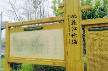 桃花江竹海风景区,位于益阳桃花江国家森林公园内,核心景区规划面积65平方公里,共拥有楠竹5万亩,据说