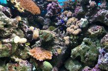 各类的神奇水族 要说起来,鹿儿岛的水族馆也是颇有特色哦。靠近海的地方或许总是那么与众不同, 但是日本