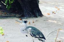 梦幻奢华六星岛屿,蜜月旅行的最佳目的地  这座距离马累机场只有25分钟行程的岛屿,是世界出名的蜜月之