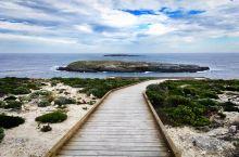 旗舰拱门 Admirals Arch,坐落于南澳袋鼠岛弗林德斯蔡斯国家公园。它是一座经过呼啸无情的海