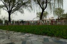 千枝楊柳射陽河。