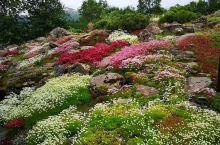 """世上最北的植物园,北极高山植物园  【对北极的不完全认知】 一听""""北极高山植物园""""就知道这是一个位于"""
