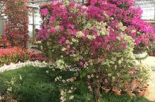 六郎湿地花海,适合阳春三月,全家人一起去旅游的地方,尤其是室内花园,让小朋友增加了许多植物方面的知识