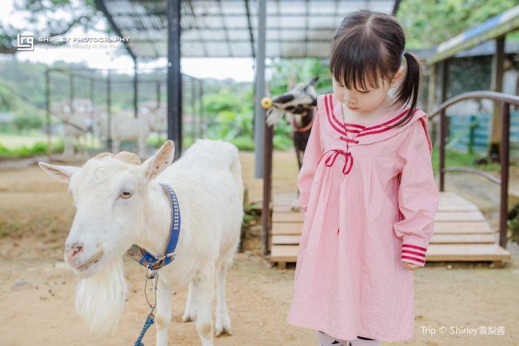 오키나와 네오파크동물원3